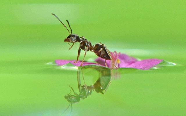 一只蚂蚁被风刮落到池塘里,然后…